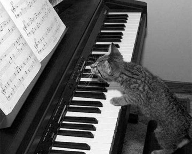 Как быстро научиться играть на фортепиано? Советы и рекомендации по самостоятельному обучению пианино для начинающих