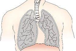 Постановка дыхания - как правильно дышать при пении?
