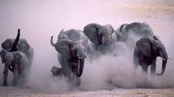 Животные и музыка: влияние музыки на животных, животные с музыкальным слухом